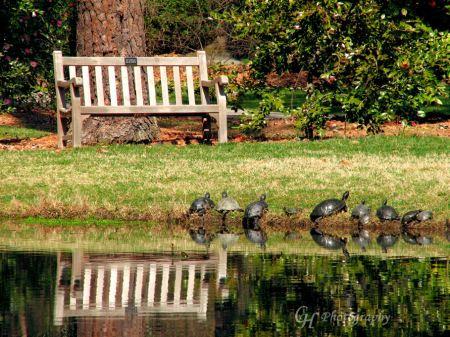 turtle-salutation-to-the-sun